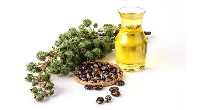 dầu castor nguyên chất