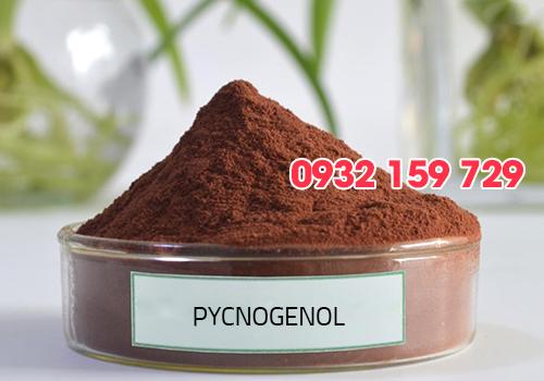 Bột thông đỏ Pycnogenol, nguyên liệu mỹ phẩm, tác dụng của thông đỏ