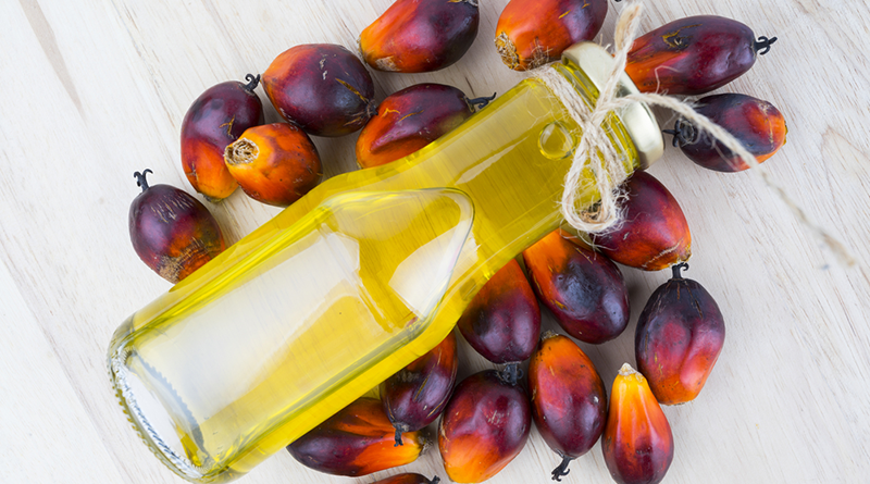 Dầu cọ và lợi ích của dầu cọ cho da và tóc